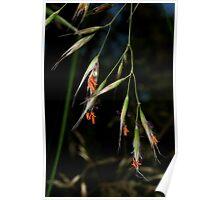 Spear Grass Poster
