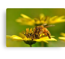 Bee nice! Canvas Print