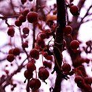 Winter Berries by Josrick