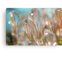 Iced Canvas Print