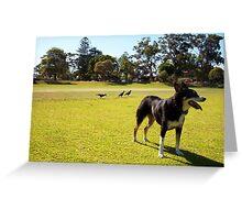 Magpies - 14 11 12 - Three Greeting Card