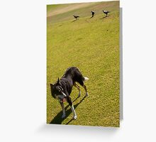 Magpies - 14 11 12 - Two Greeting Card