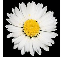 Top View of a White Daisy Isolated on Black Photographic Print