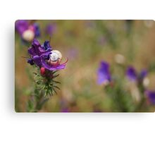 Snail In A Flower Canvas Print