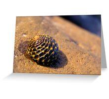 Tiger Shell Greeting Card