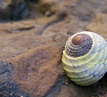 Blue Green Shell by Michelle Ricketts