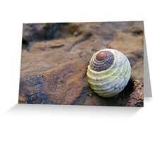 Blue Green Shell Greeting Card