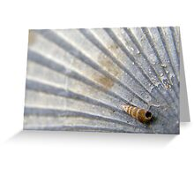 Shell on a shell Greeting Card