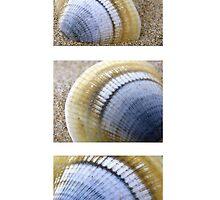 Seashell Trio by Michelle Ricketts