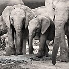 Elephant Family by Lindsay Basson