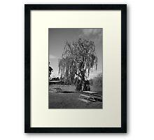 Willow park Framed Print