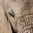 Africa's Gentle Giant by Lindsay Basson