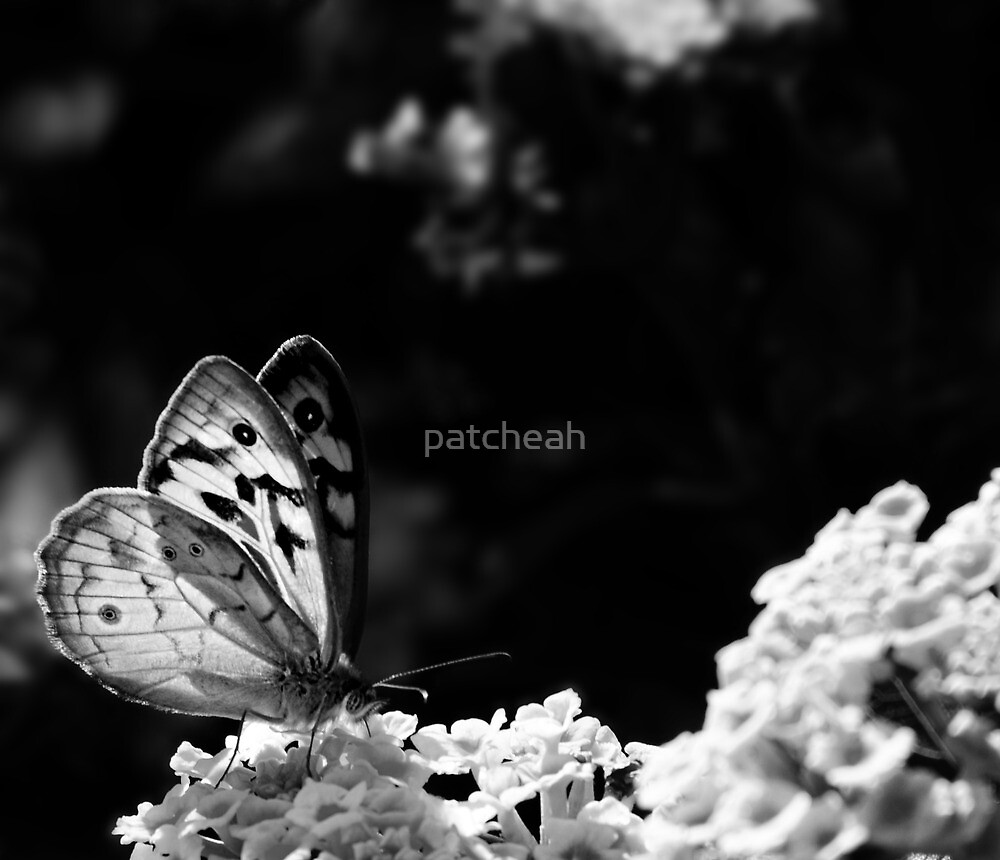 Light by patcheah