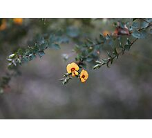Wild Flowers at Blackdown National Park Photographic Print