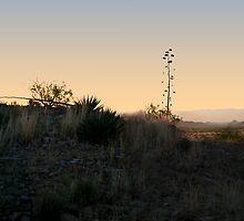 Yucca Sunrise 203 by WDWillms