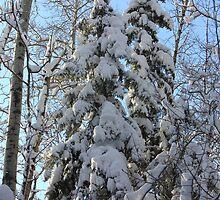 Winter's Majesty by Jim Sauchyn