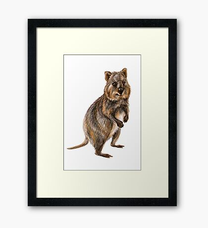 Cute little quokka Framed Print