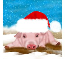Winter Holiday Pig In Holiday Hat Photographic Print