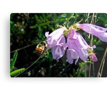 Busy bumble bee Metal Print