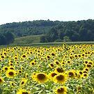 Sunflowers iPad Case by Annlynn Ward