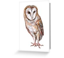 Barn owl drawing Greeting Card