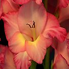 Gladiolus iPad Case by Annlynn Ward