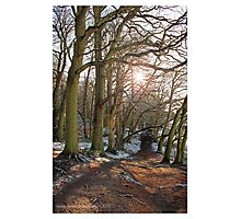 Winter Woodland Photographic Print