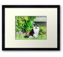 Black and White Cat by Flowers Framed Print
