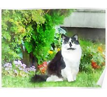 Black and White Cat by Flowers Poster