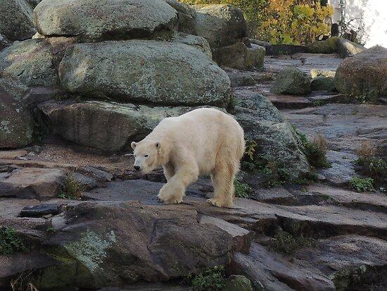 Big Bear Paws by CreativeEm