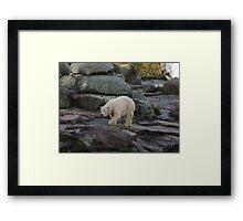 Big Bear Paws Framed Print