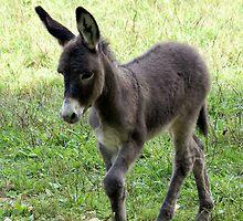 Donkey Colt iPad Case by Annlynn Ward