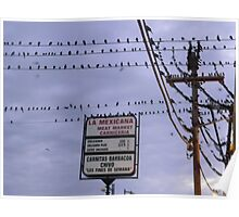 "Grackles at ""La Mexicana"" Station Poster"