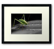 Bush Cricket Framed Print