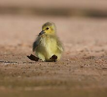 rock-a-bye-gosling by ruth  jolly