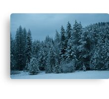 Family of Pines on Aladdin Road Canvas Print