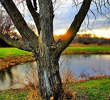 Carlin Weld Park Tree by EBArt
