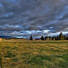Fence Line Forever by lincolngraham