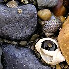 Rocks and Shells by Michelle Ricketts