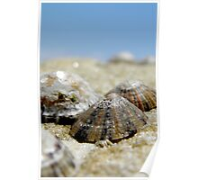 Limpets Poster