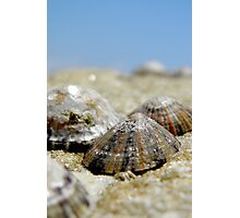 Limpets Photographic Print