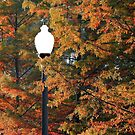 Street Lamp Among The Trees by RickDavis