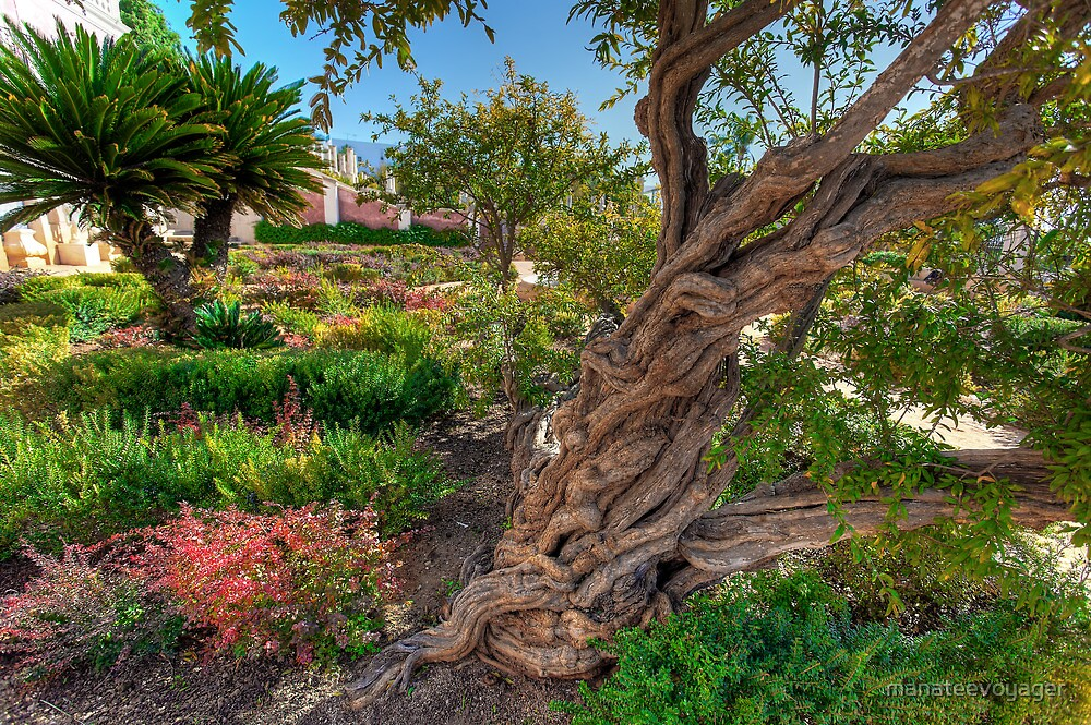 The Old Man Of The Garden by manateevoyager