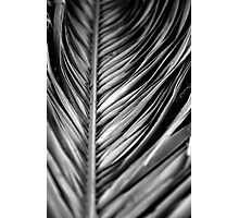 Silver Leaf Photographic Print