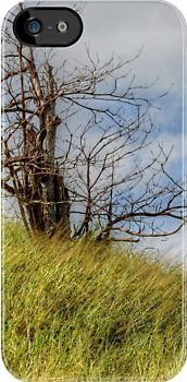 Lonely Tree | iPhone/iPod Case by 242Digital