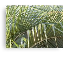 Fronds criss-cross Canvas Print