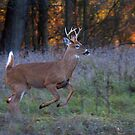 Scent of a Doe by Jim Cumming