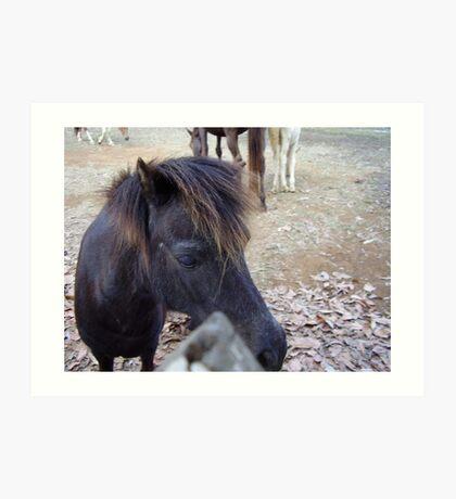 Miniture Horse Art Print