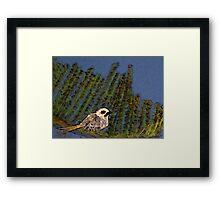 Alone, Tern. Framed Print
