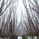 Snow Path by Greg Carrick